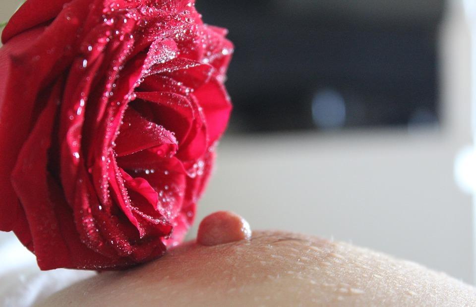 nipple, breast, rose