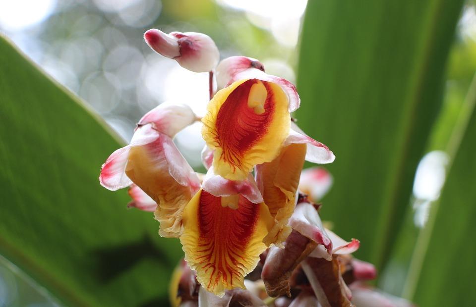 flower, linda, exotic