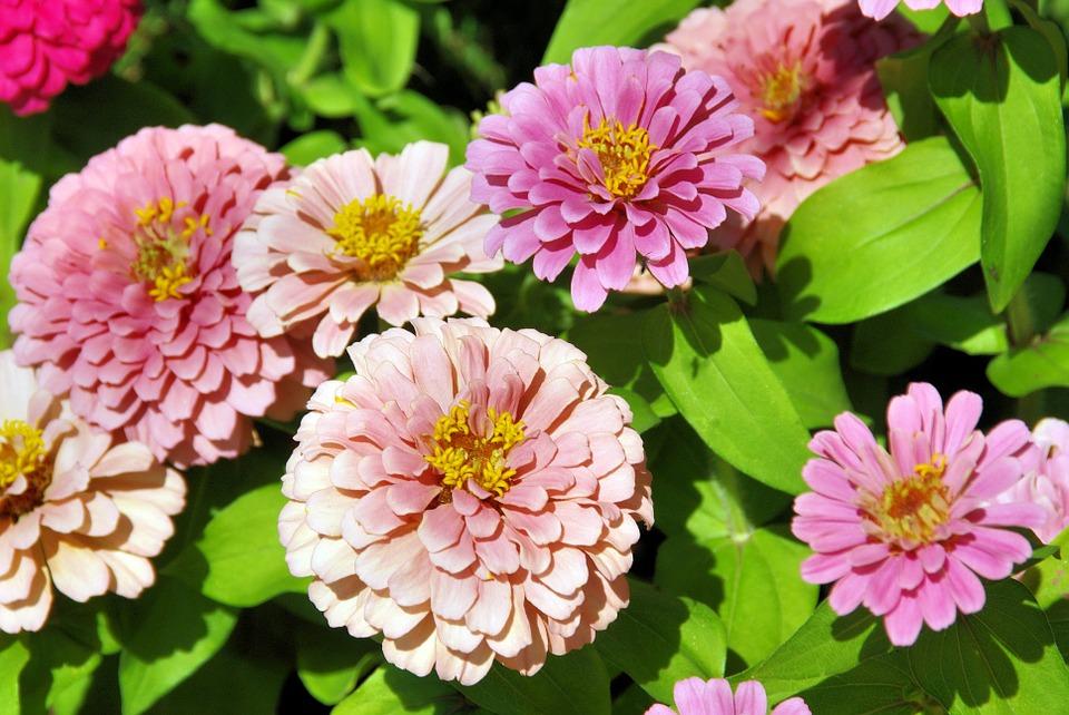 exotic flower, pink, bouquet