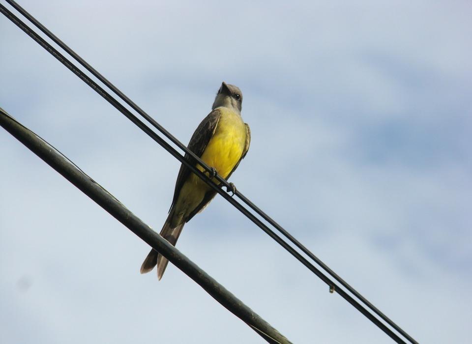 ceu, bird, tropical birds