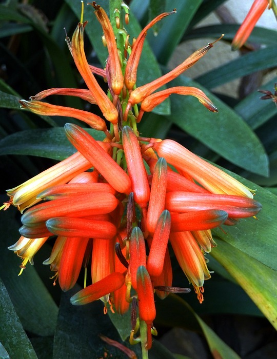 flower, exotic, orange