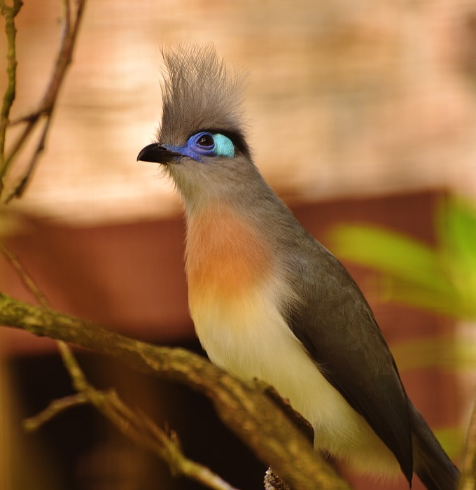 bird, colorful, funny