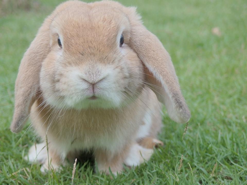 bunny, rabbit, easter