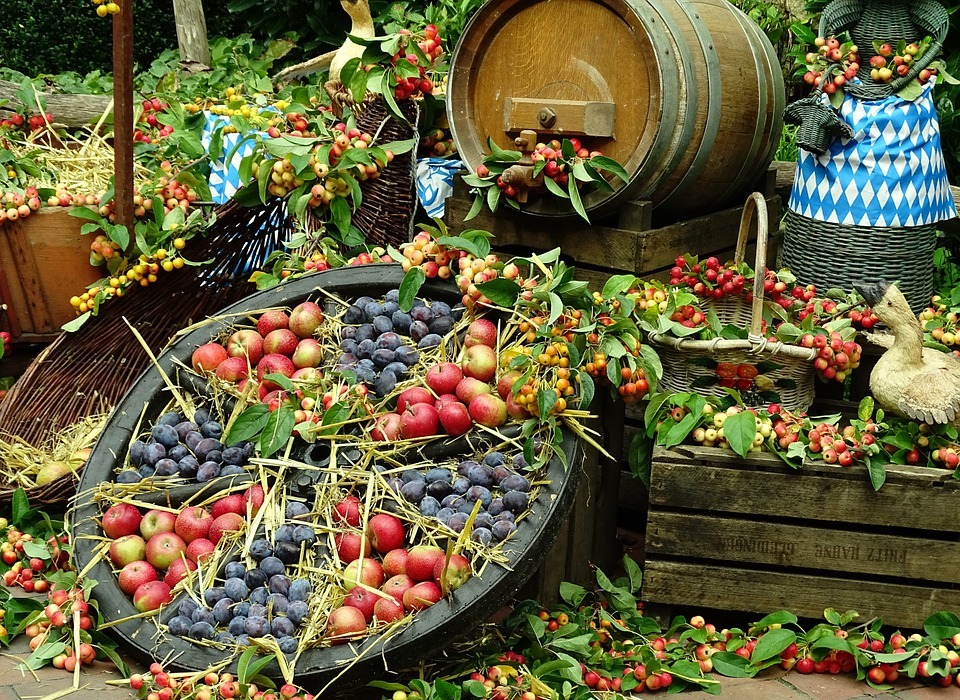 thanksgiving, fruit, nature
