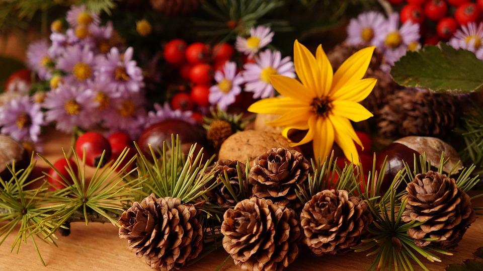 composition, plants, flowers