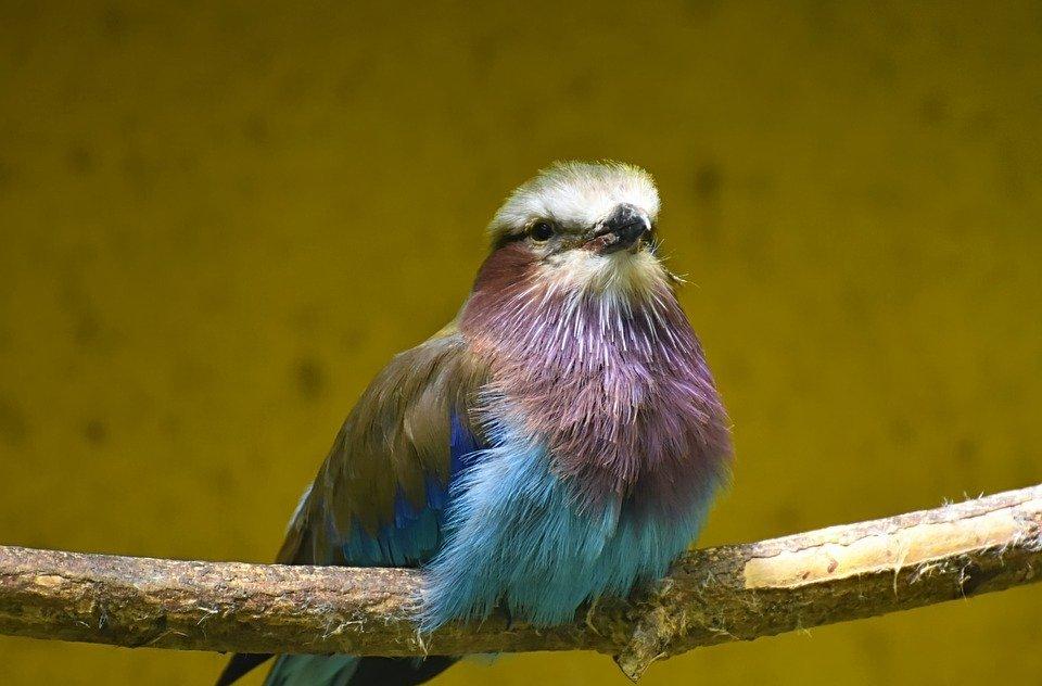 bird, colorful, nature