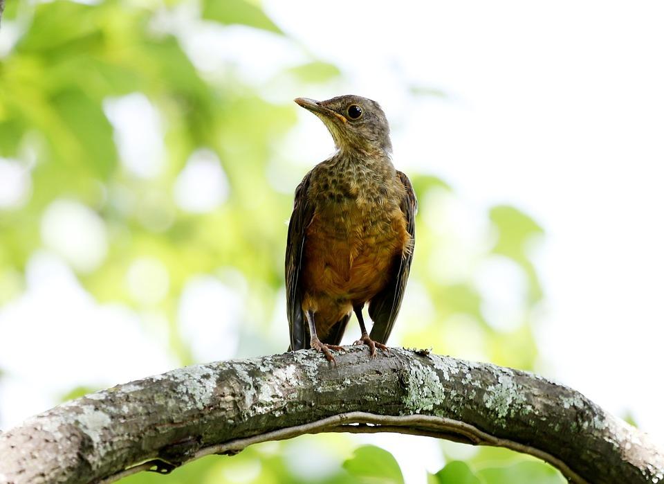 creamy orange, bird, tropical bird