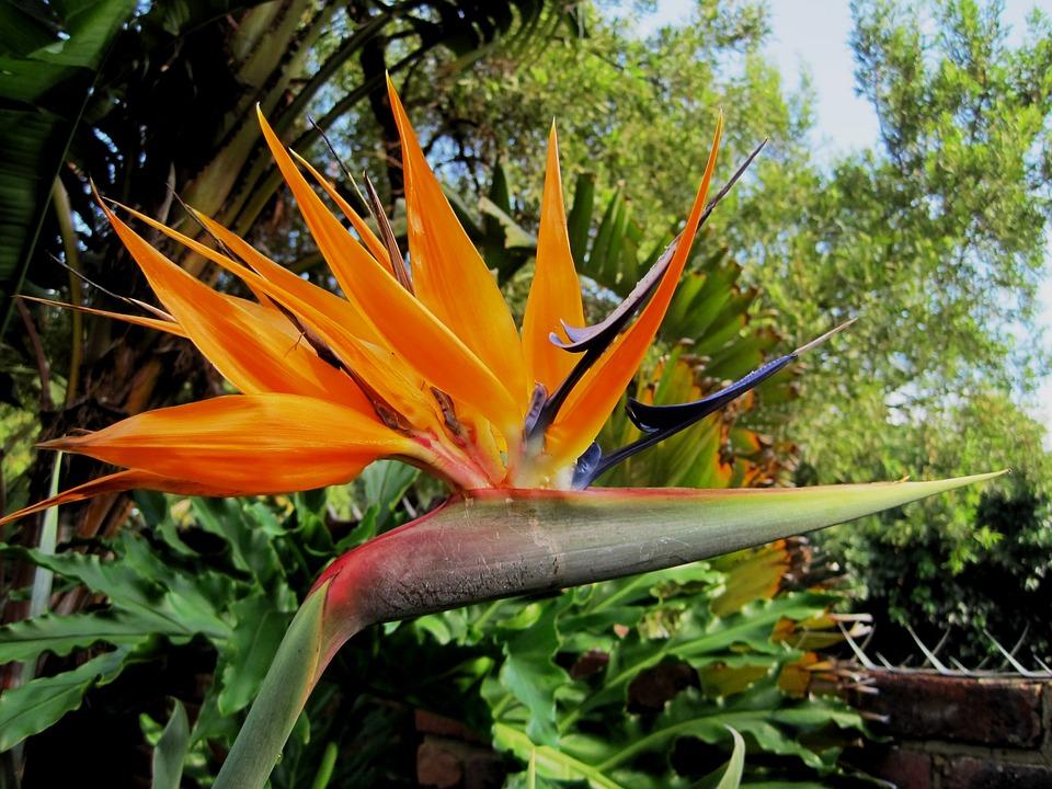 flower, exotic, africa