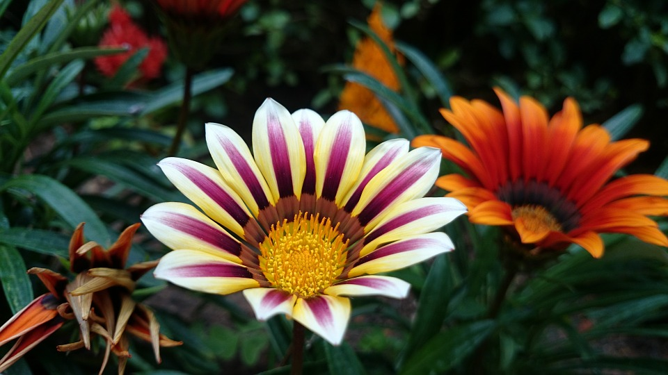 flower, exotic, garden