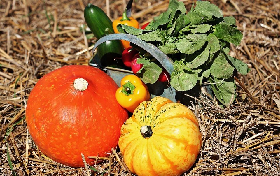 thanksgiving, pumpkins, cucumbers
