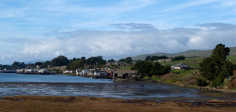 bodega bay, bird walk, harbor