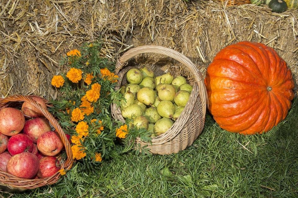 thanksgiving, fruits, festival