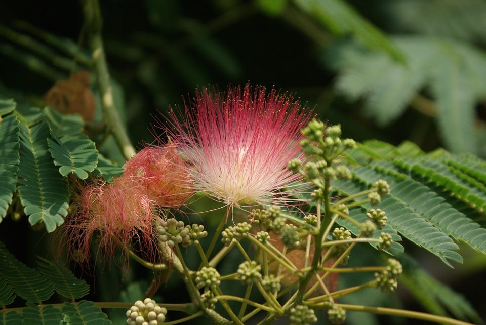 flower, wildflower, exotic
