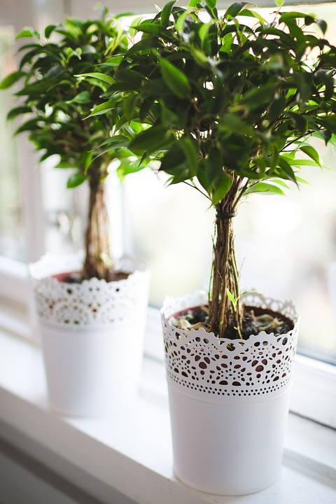 plants, potted, green