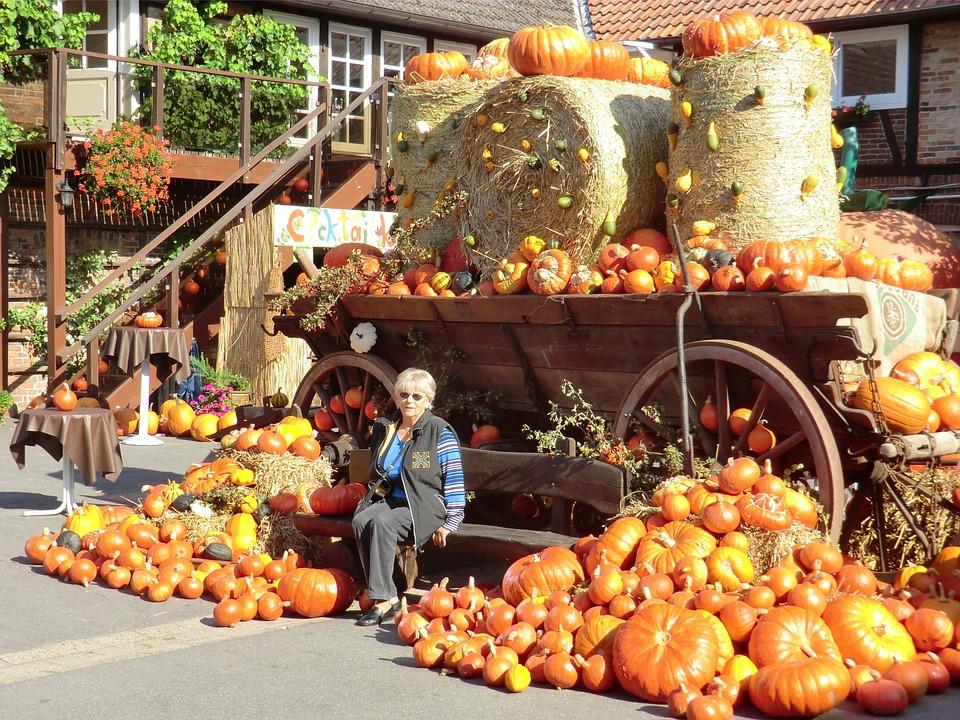 thanksgiving, autumn, pumpkin