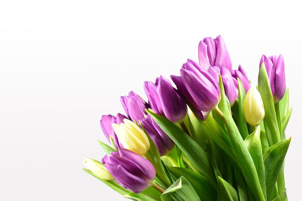 tulips, tulip bouquet, flowers