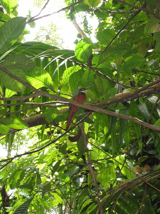 caribbean, bird, tropical