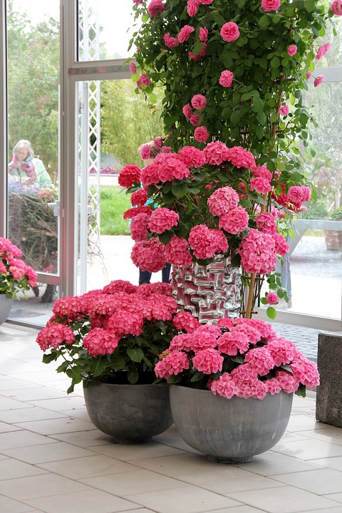 hydrangeas, pink, decoration
