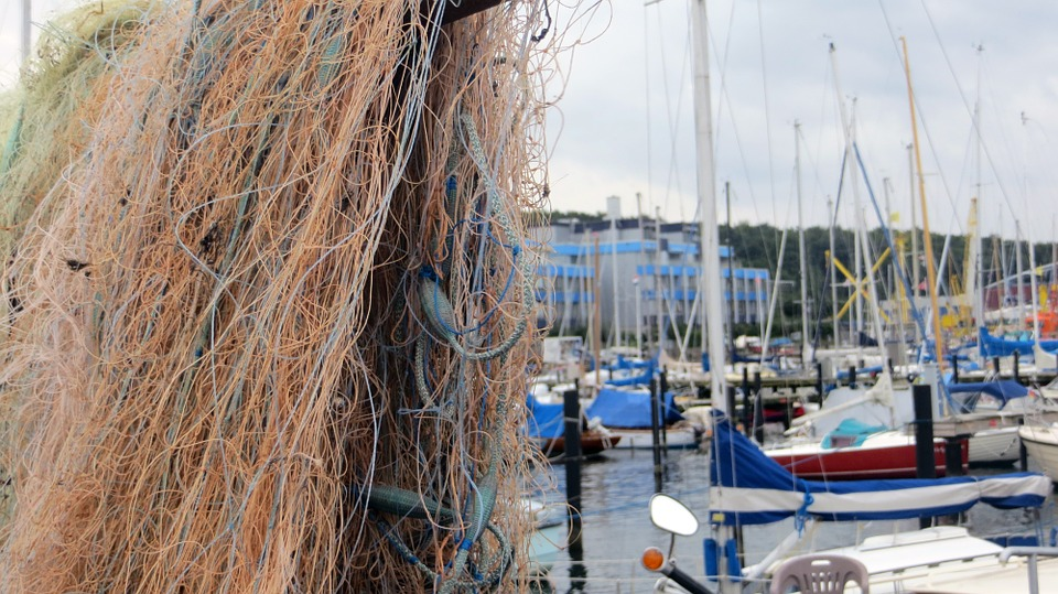 fishing net, fish, sea