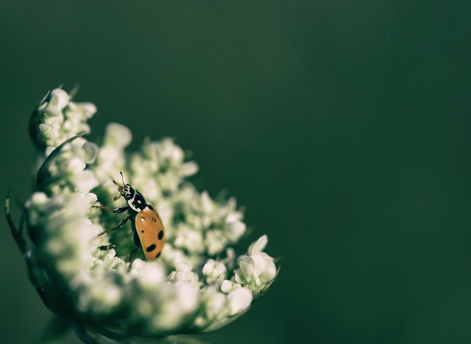 animal, beetle, blur