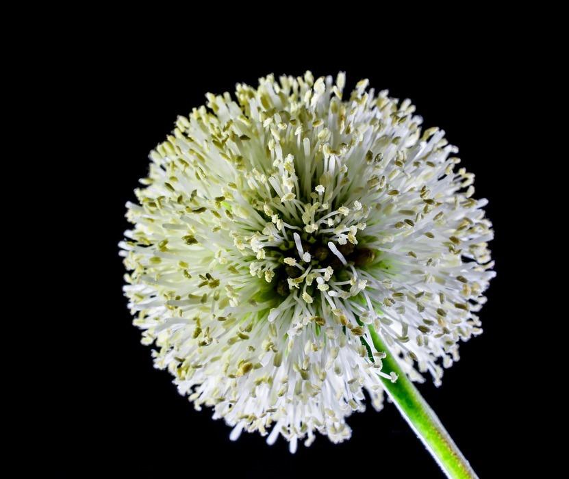 small flower, flower, wild flower