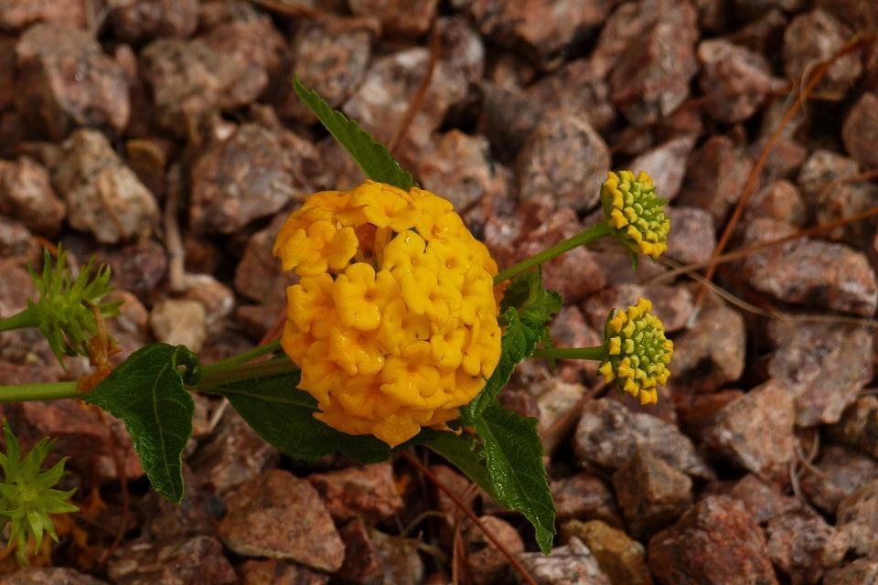 yellow, exotic, flower