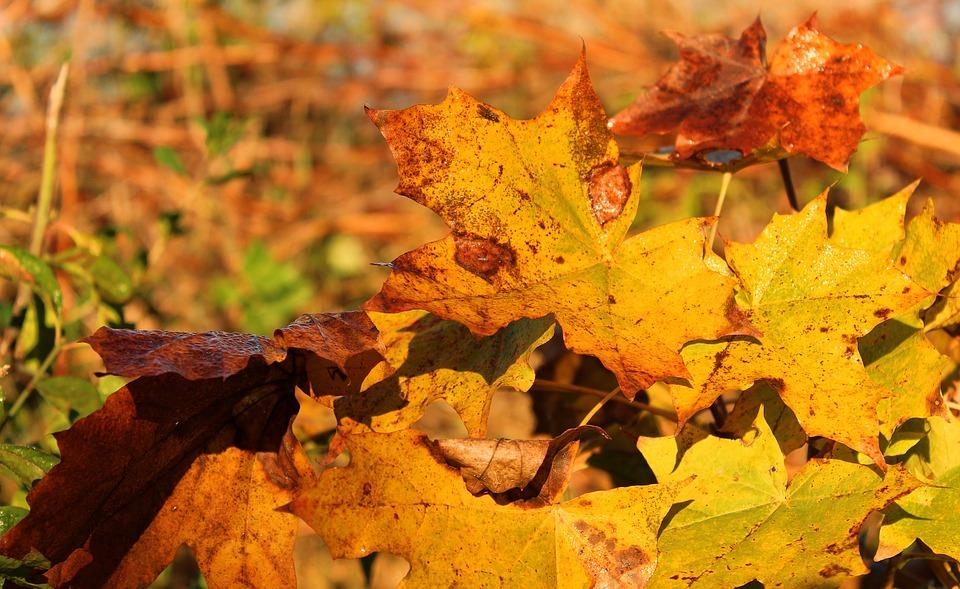 holidays, autumn, golden autumn