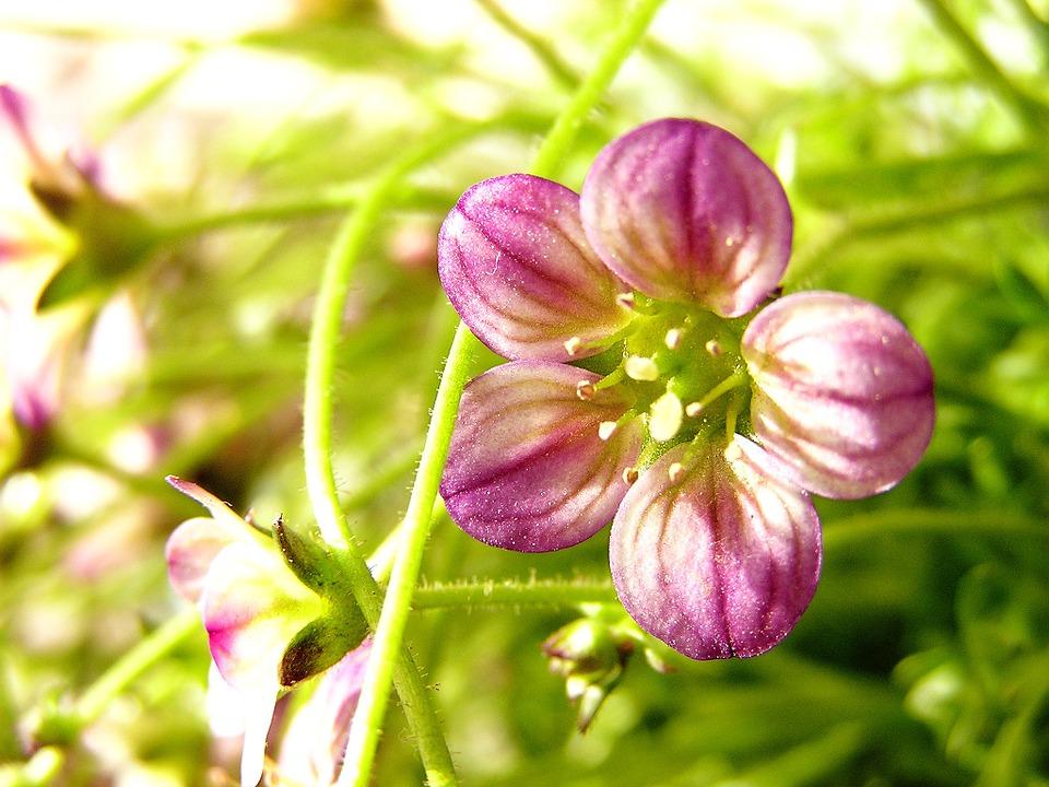 flower, delicate flower, small flower