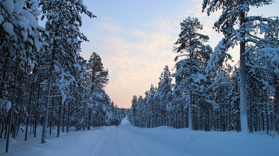 snowy road, winter, forest road