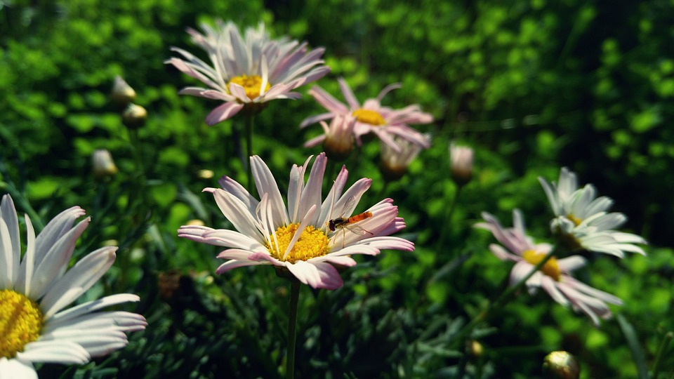flower, small insects, natural