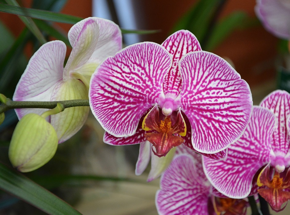 flower, pink orchid, exotic
