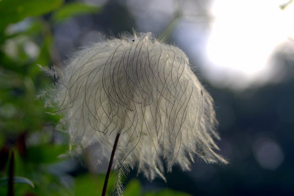 flower, unusual, exotic