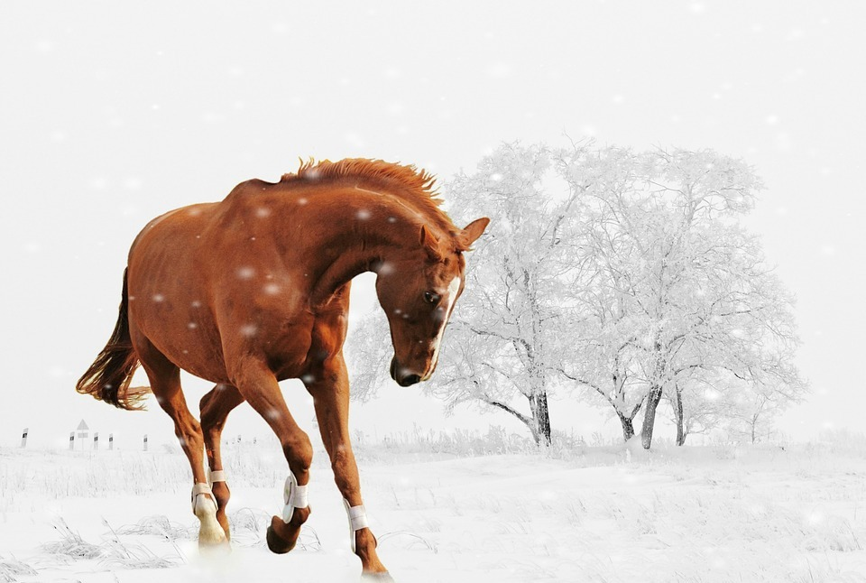 winter, horse, play