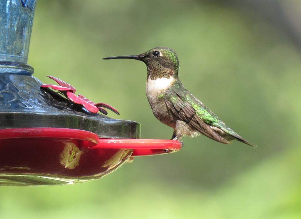 bird, hummingbird, colorful