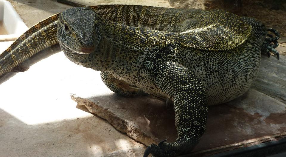 reptile, amphibians, expression