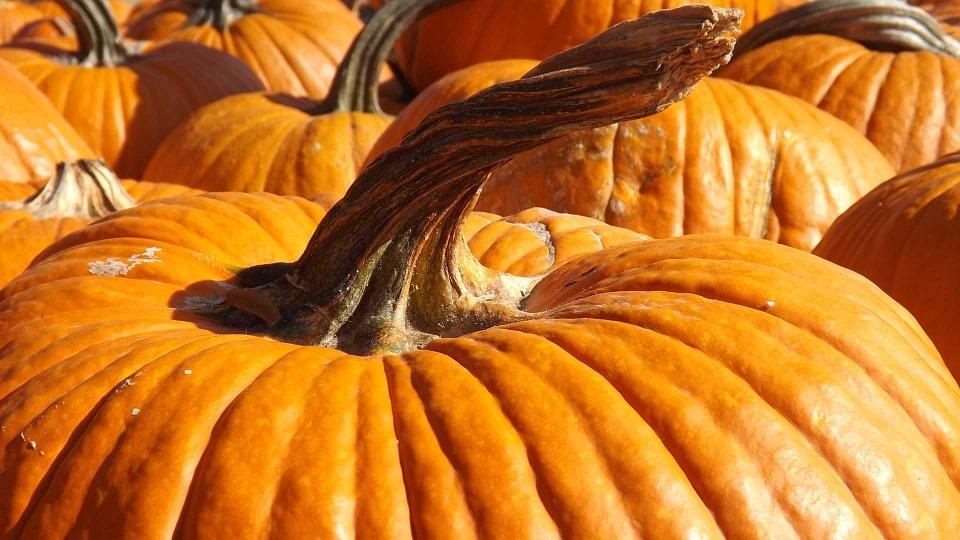 pumpkin, holiday, season
