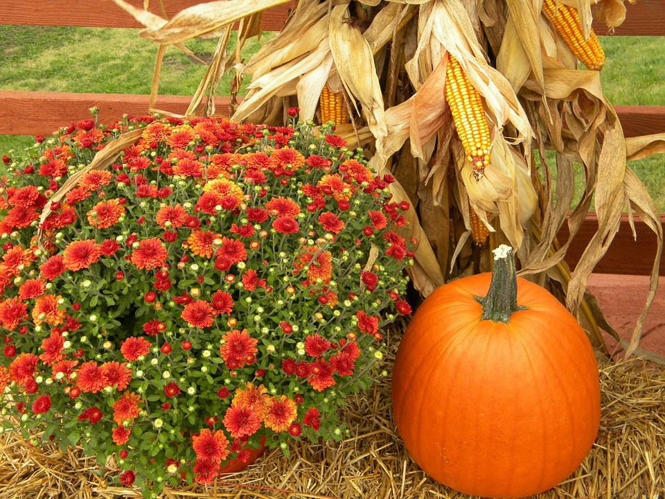 thanksgiving, pumpkin, harvest