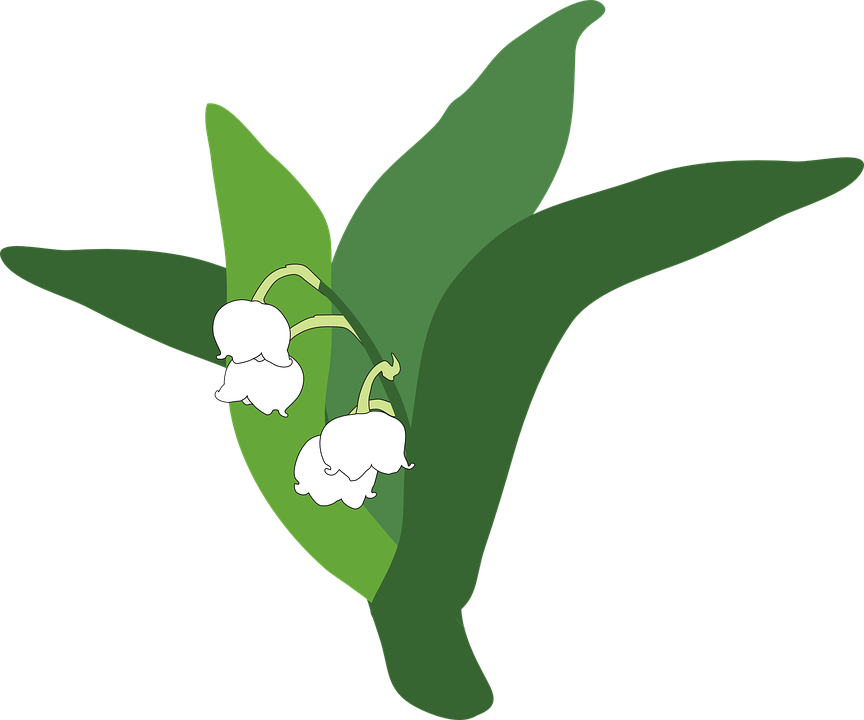 lily of the valley, plant, flower
