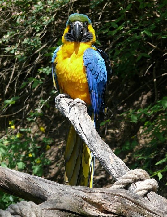 parrot, exotic, bird