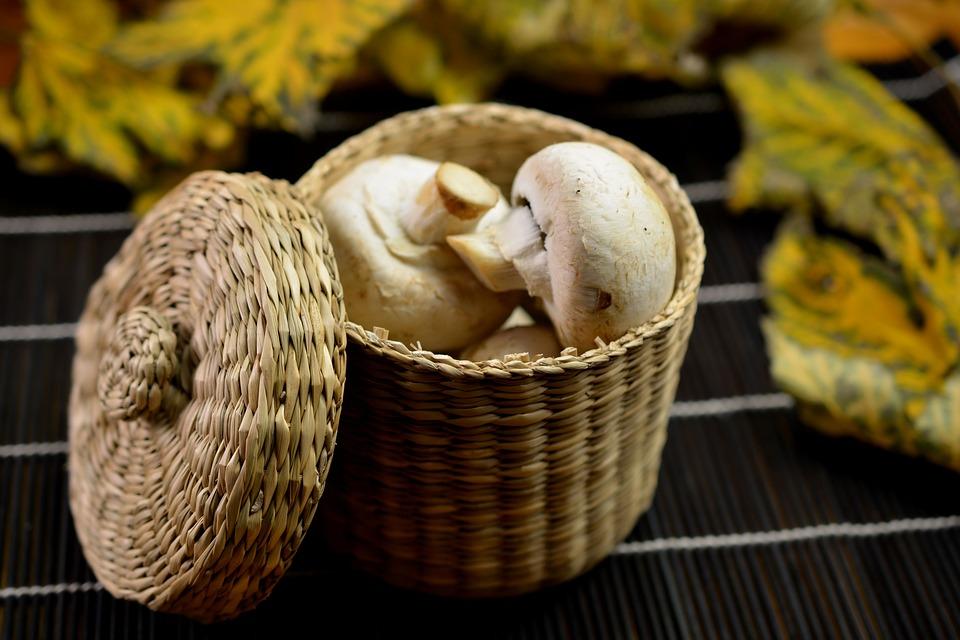 mushrooms, food, dish