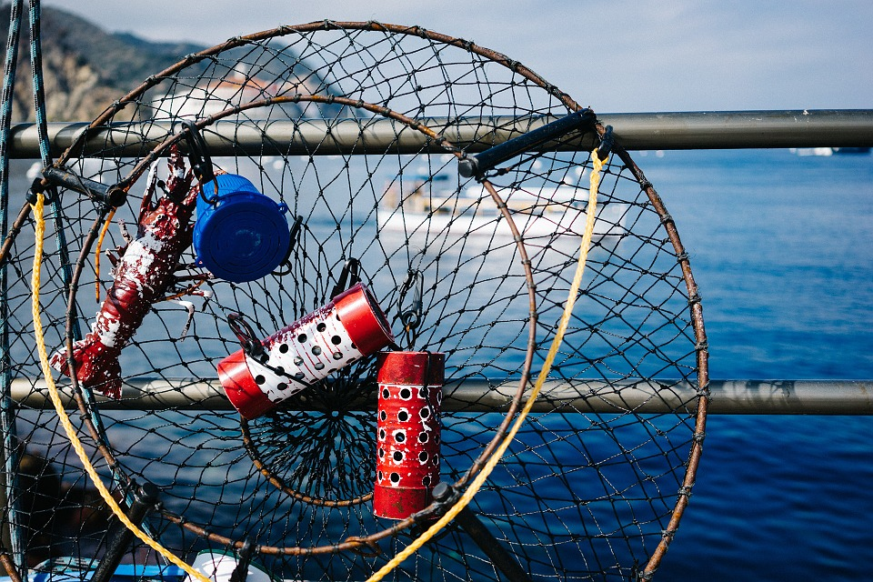 fishing, net, catch