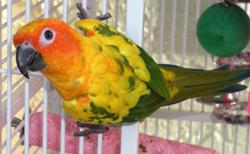 colorful, parrot, lori