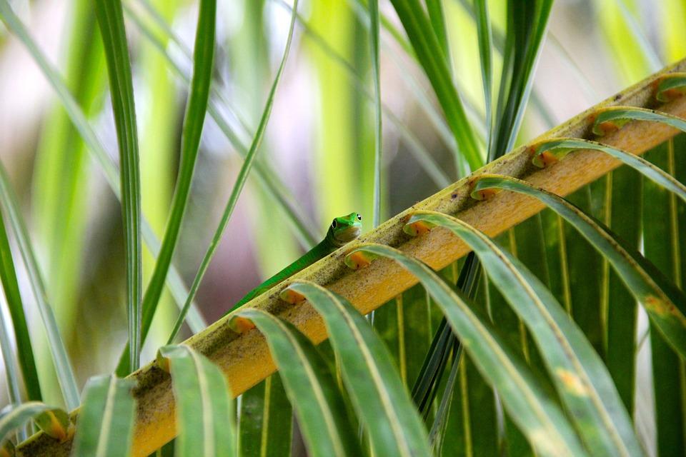 reptile, plant, cactus