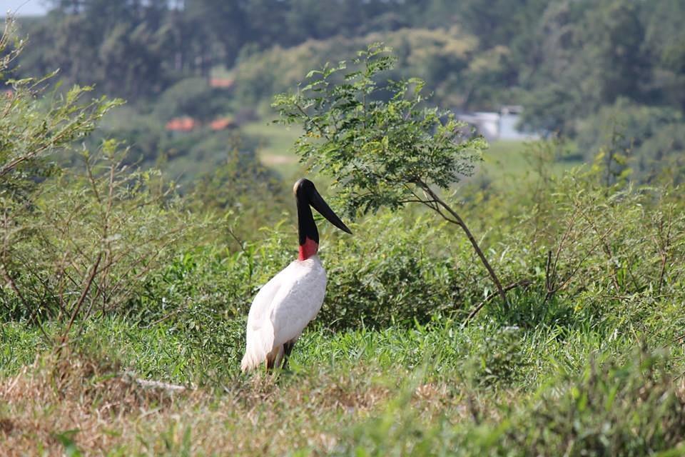 heron, bird, tropical birds