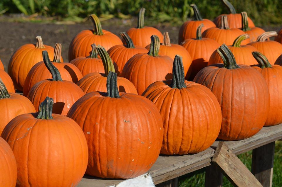 pumpkin, autumn, october