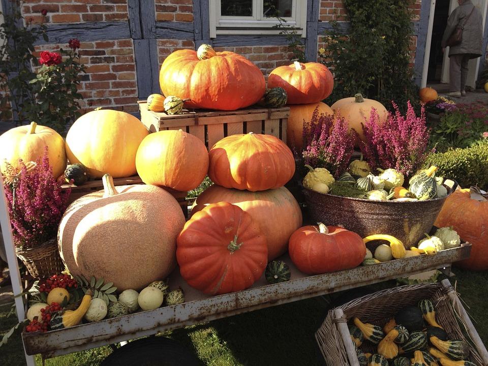 pumpkin, halloween, pumpkin festival