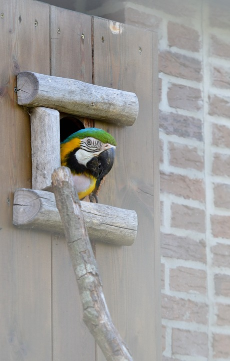 parrot, ara, colorful