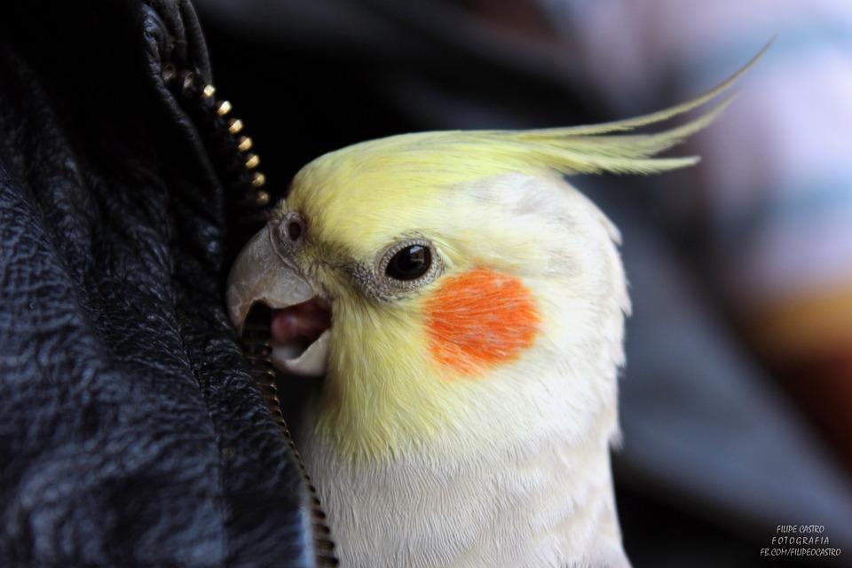 parrot, ara, exotic