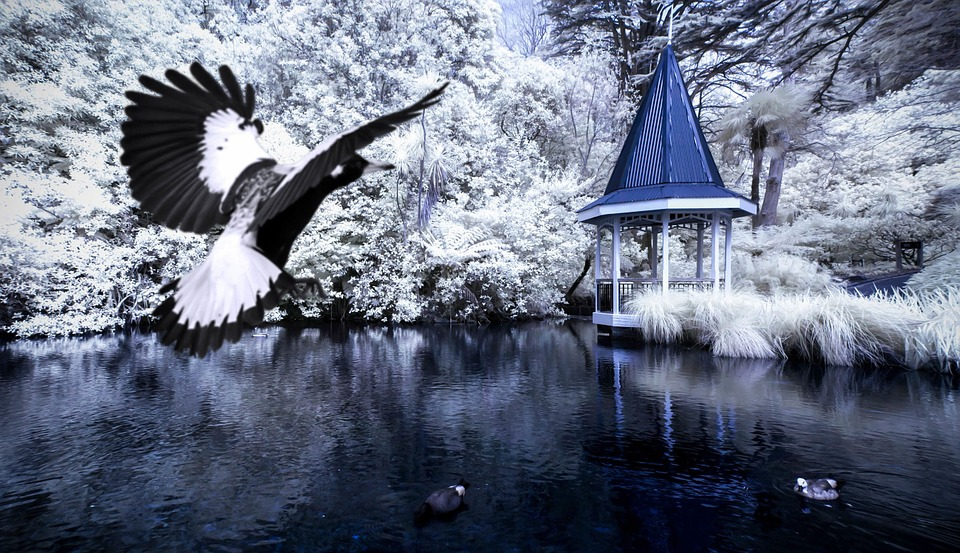 gazebo, birds, lake