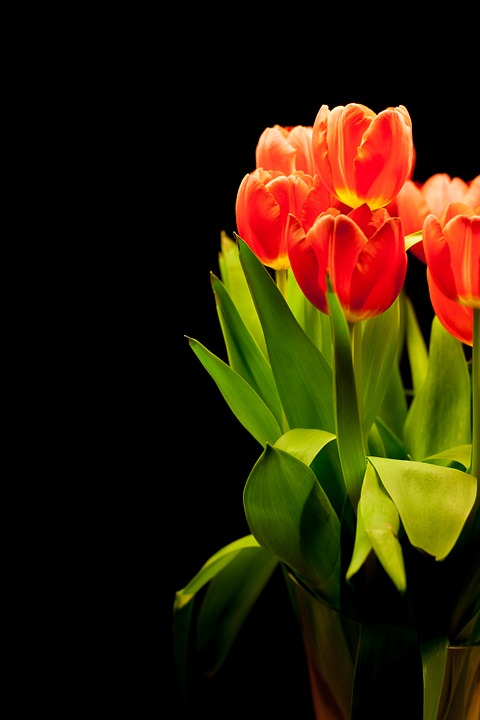 tulips, tulip bouquet, flowers
